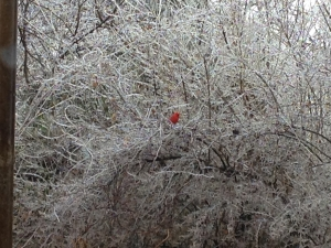 Braveheart after the ice storm