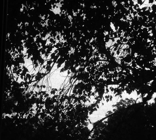 Night Trees, 2015, Archival Digital Print